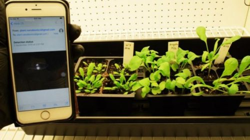 Spinach Mine Detection