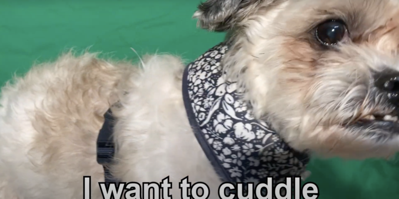 dog translation collar telling viewers the barking dog wants a cuddle